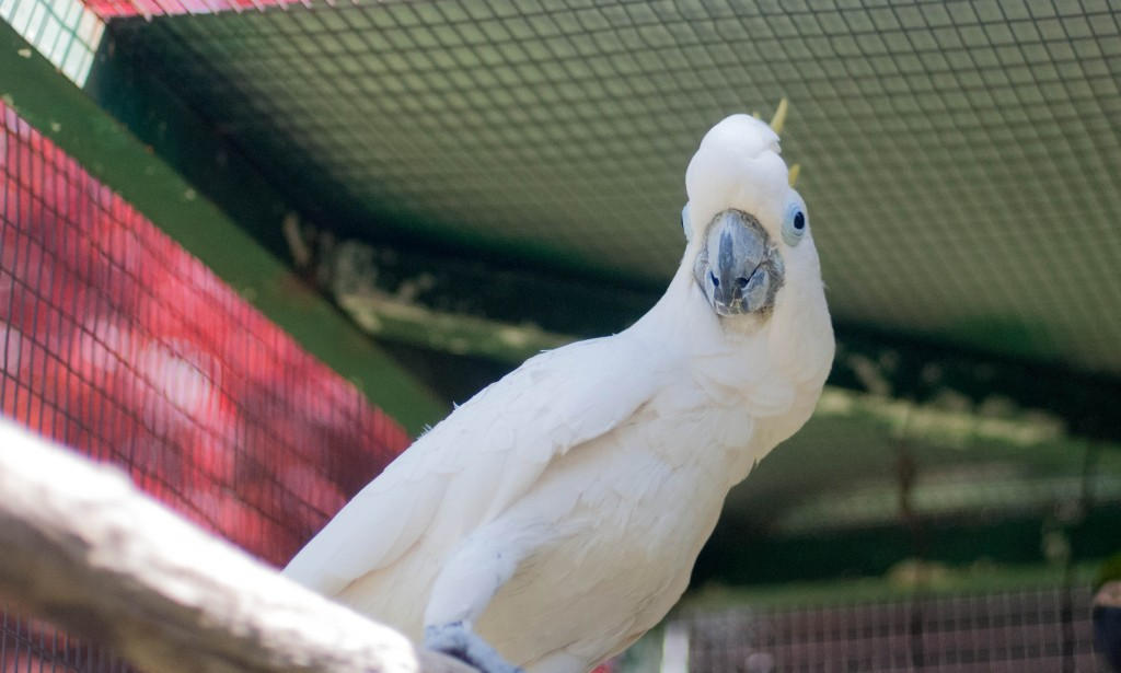 NAPABIRD-37