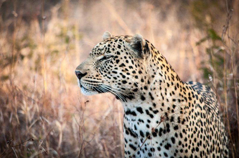 We were incredibly lucky to run into this leopard.