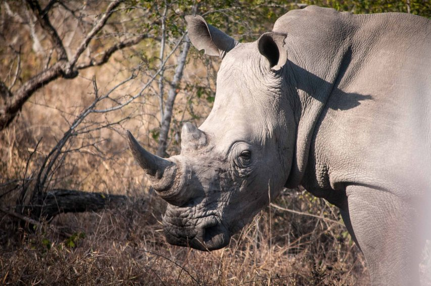 Another rhino photo just for Susan Rowley, who has a fixation on them.