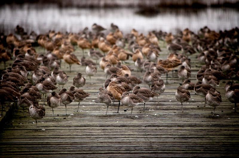Does this many birds make it a birdwalk?