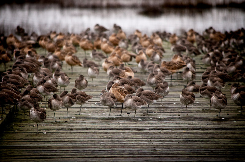 Does this many birds make it a birdwalk?