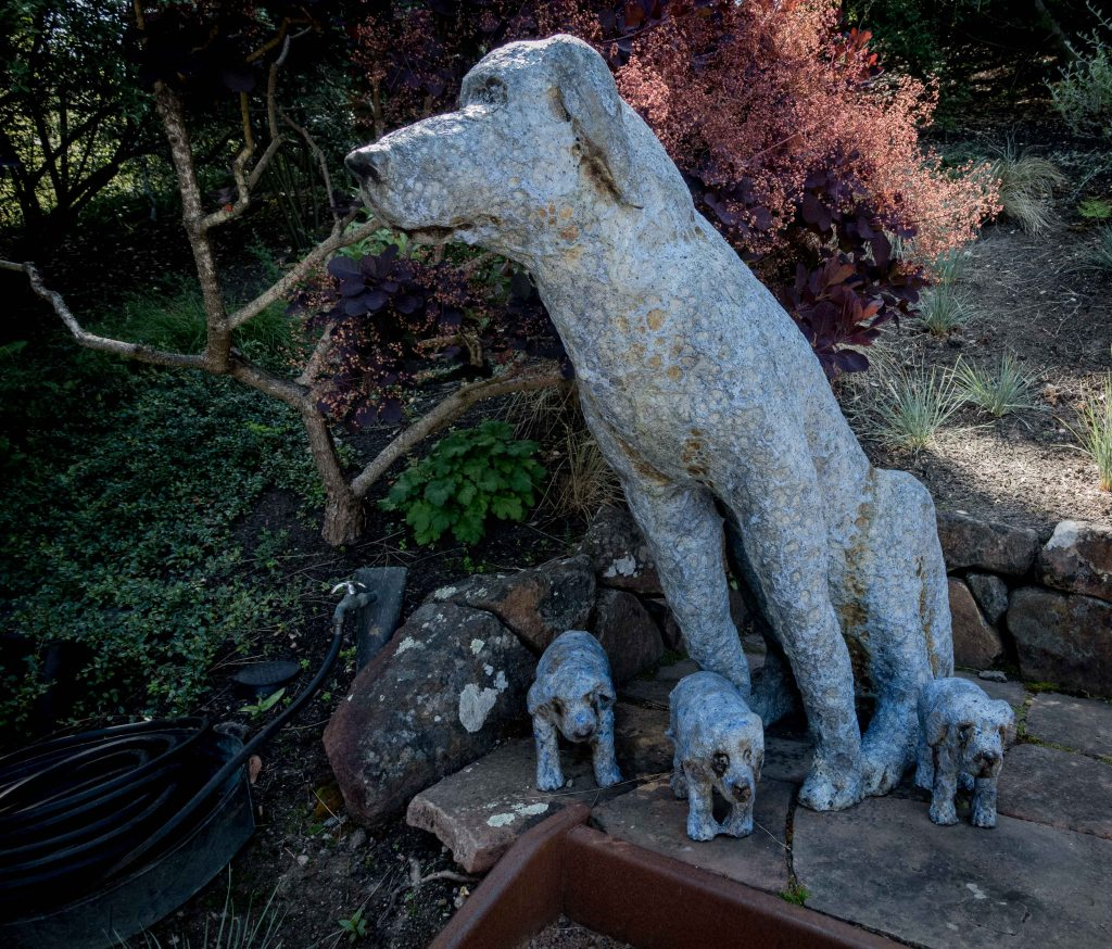 Blue dog, with pups. By Marc Chatterly