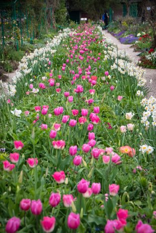 Endless rows of flowers receding into space