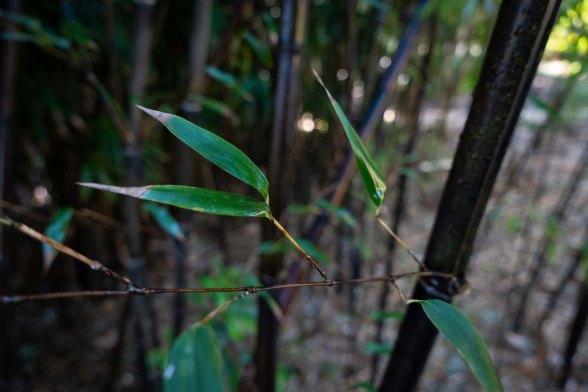 lotusland-7