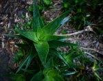 lotusland-9