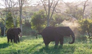 elephantZuluNyala-10