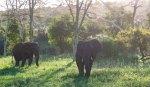 elephantZuluNyala-11