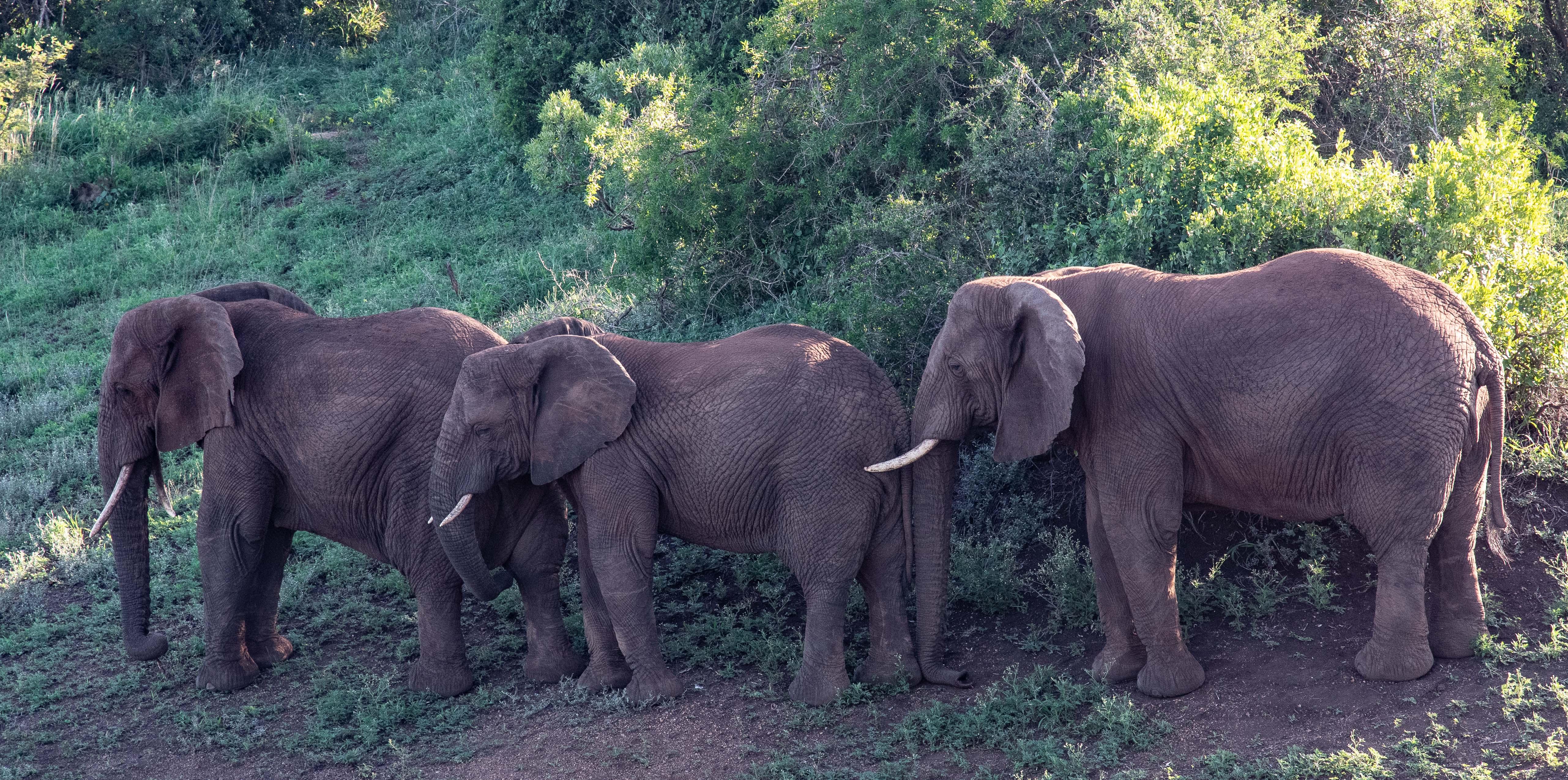 elephantZuluNyala-12
