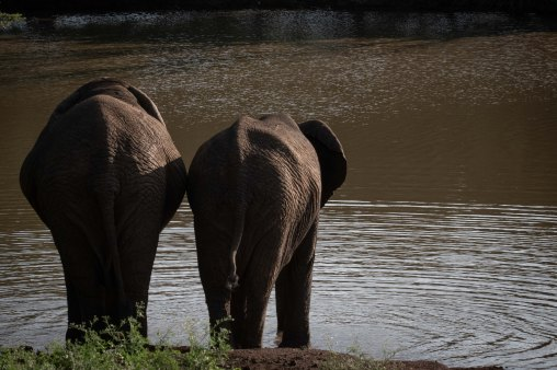 elephantZuluNyala-2