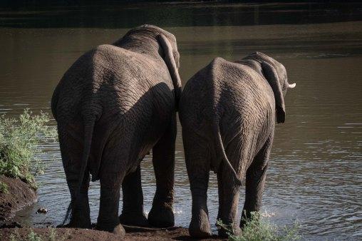 elephantZuluNyala-3