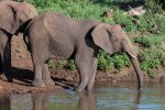 elephantZuluNyala-4