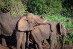 elephantZuluNyala-5