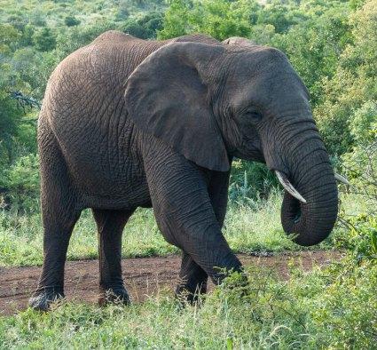 elephantZuluNyala-6