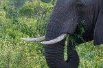 elephantZuluNyala-7