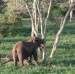 elephantZuluNyala-8