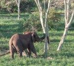 elephantZuluNyala-9