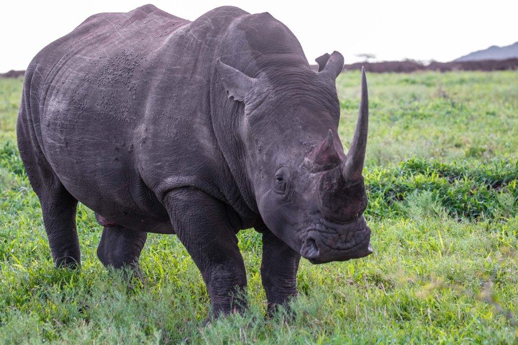 rhinoZuluNyala-1